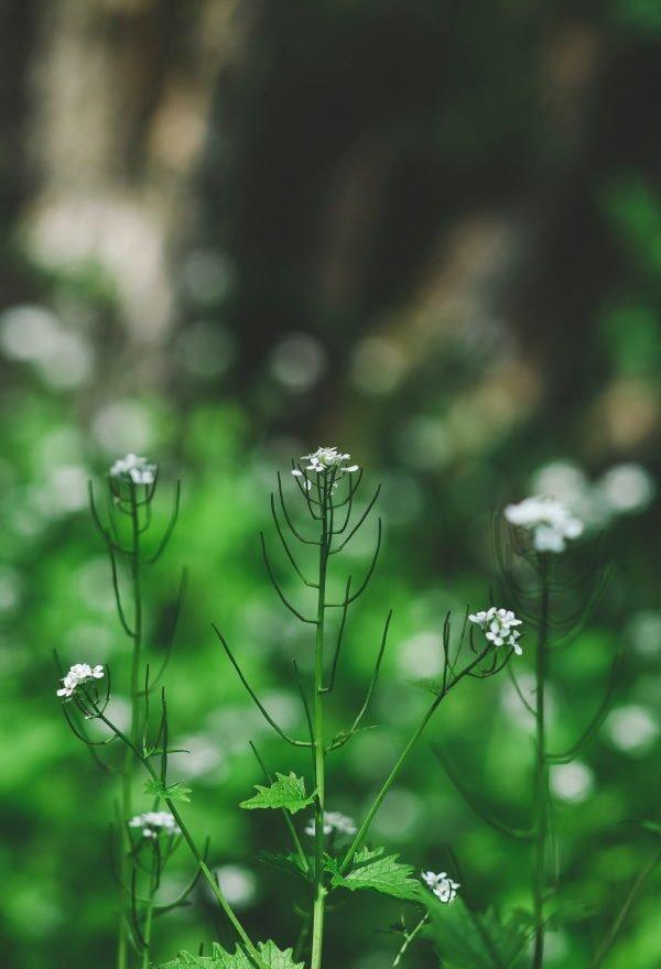 Plante foran ufokuseret grøn baggrund